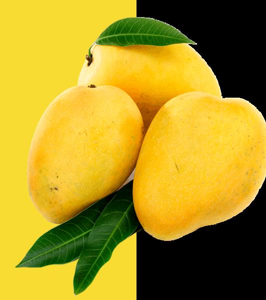 mango_02