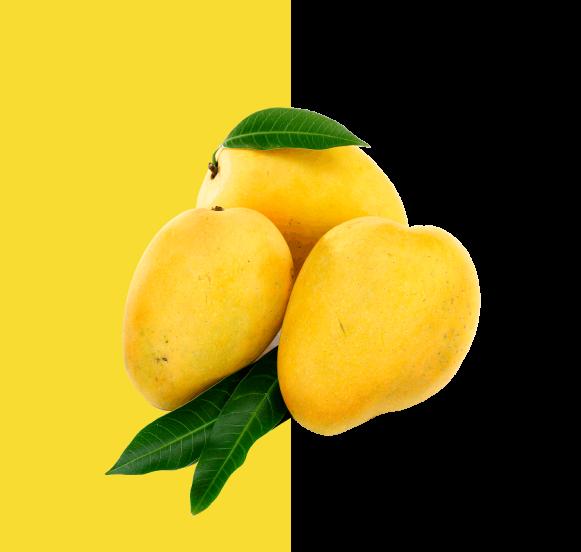 mango-specs-2-02